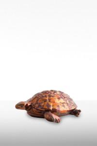 RF236-tartaruga-gr.